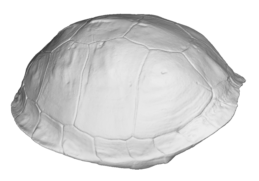 Turtle shell scan